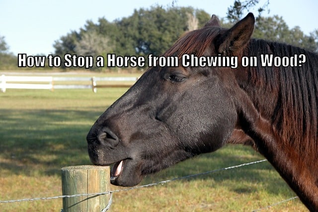 horse chewing on post
