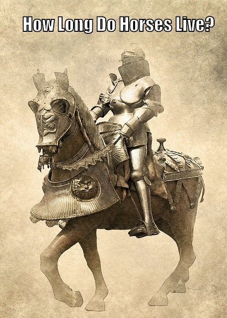 old horse knight