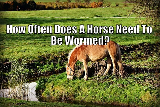 worming a horse when