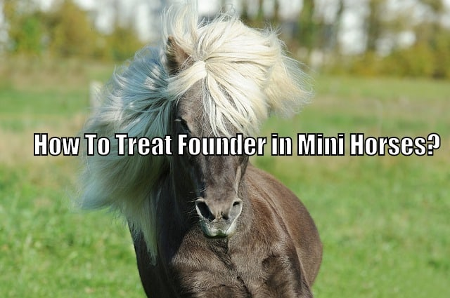 Found in mini horses
