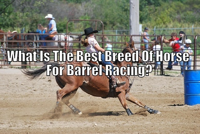 best barrel horse breed